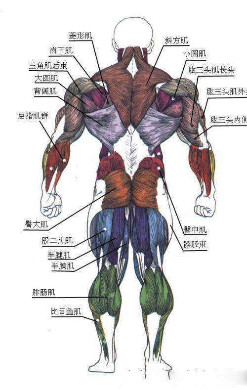 肌肉的力量及关节灵活度自测